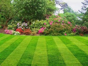 Lawn Fertilizing / Fertilizer